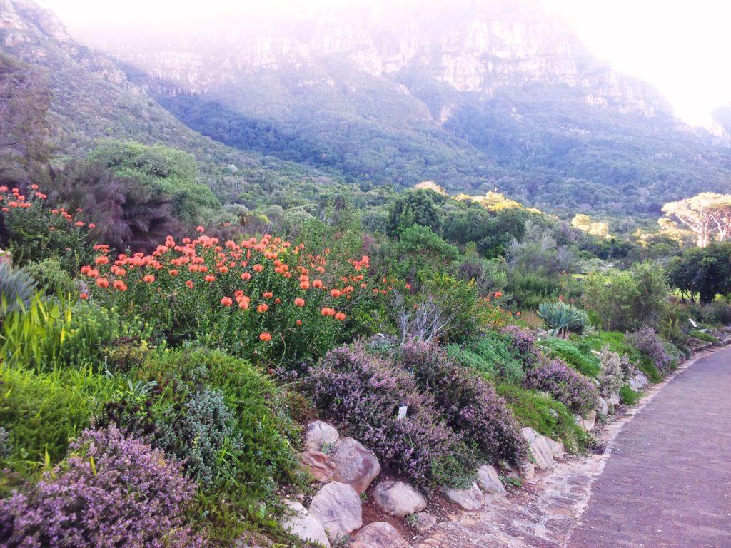 Proposal Spots in Cape Town   Fynbos Garden Kirstenbosch, Cape Town
